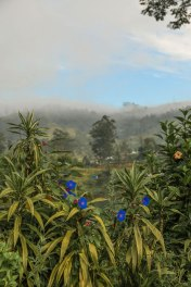 Ceylon-Tea-Trails-1