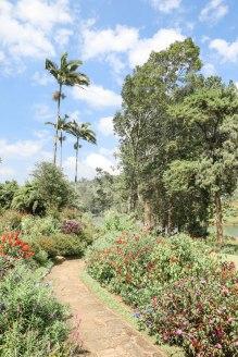Ceylon-Tea-Trails-6